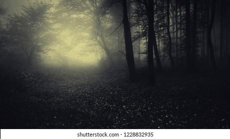 dark fantasy woods