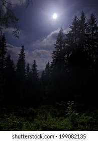 Dark fir tree forest under white moonlight
