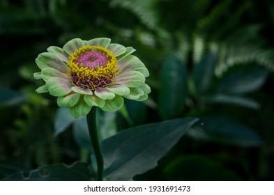 Dark Flower Green Pink Background
