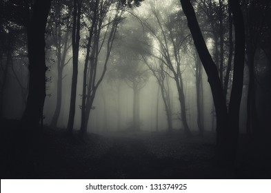 dark foggy forest after rain