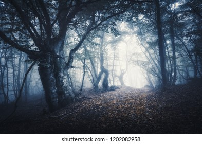 Dark foggy forest. Mystical autumn forest with trail in fog. Old Tree. Beautiful landscape with trees, path, leaves and mist. Nature background. Spooky misty forest with magical atmosphere. Scenery