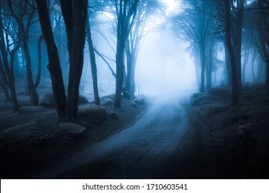Dark foggy forest and path through it. Wild woodland nature background