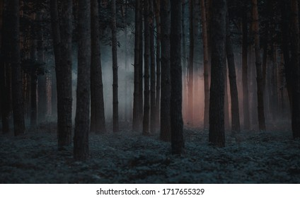 Dark foggy pine scary forest - Shutterstock ID 1717655329