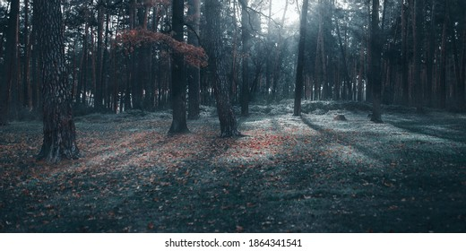 Dark foggy pine scary forest  - Shutterstock ID 1864341541