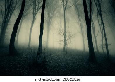 dark foggy woods, dramatic perspective