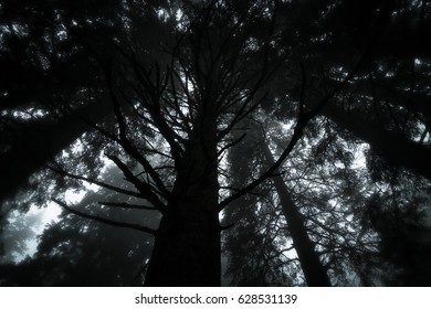 The dark forest.
