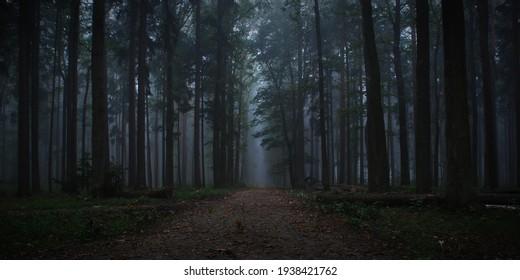 Dark forest in autumn fog - Shutterstock ID 1938421762