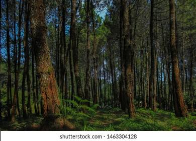 Dark forest background. Landscape view nature