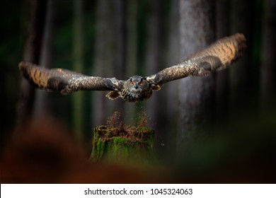 Dark forest with bird. Owl in forest habitat, tree stump. Flying Eurasian Eagle Owl with open wings, action wildlife scene from nature, Germany.