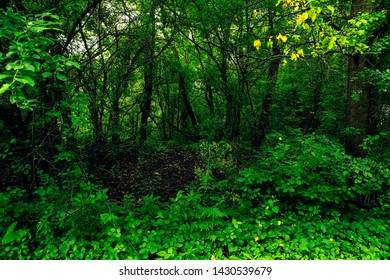 dark forest with clearing in center