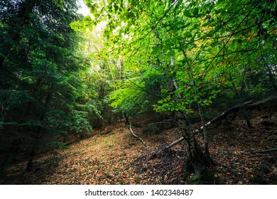 In the dark forest, the green leaves of the forest light up like a light