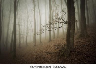 dark forest landscape