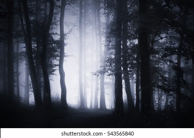 Dark forest landscape background. Woodland at night with spooky Halloween atmosphere, fog, trees and mysterious light