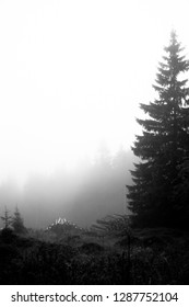 Dark forest landscape with fog in black and white, Portrait