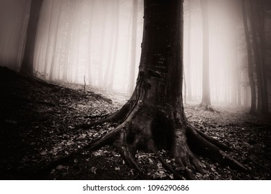 dark forest landscape with old tree, tree roots on ground