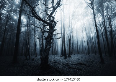 dark forest landscape with old tree