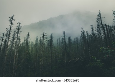 Dark forest with mist during the rainy day