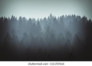 dark forest, moody silouhettes