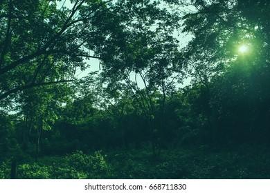 dark forest nature background green sun park