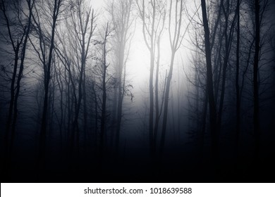 dark forest at night, fantasy woods background