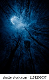 dark forest at night with moon shining through tree branches