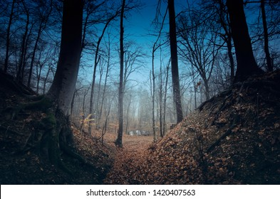 dark forest at night, mystery landscape
