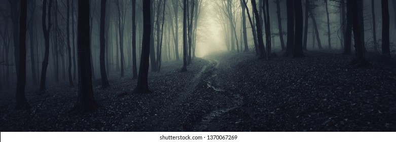 dark forest panorama, path in magical scary forest at night