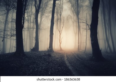 dark forest with path