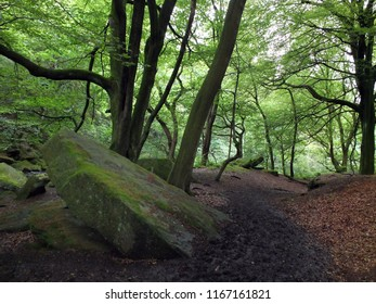 a dark forest path leading downhill with large moss covered boulders and bright green leaves on tall woodland trees