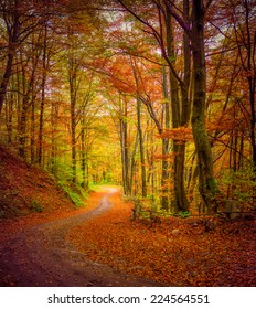 Dark forest road in the autumn forest. Retro style.