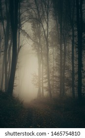 dark forest road, mysterious landscape, horror fiction scene, woods at night