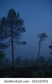 Dark forest with silhouette trees