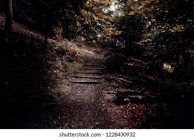 In the dark forest a small flight of stairs is