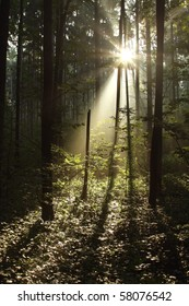 Dark forest with sun rays passing through the trees.