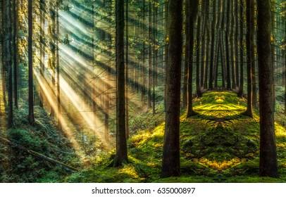 Dark forest sunlight woodland landscape