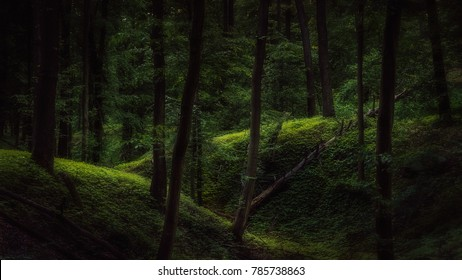 Dark forest with a touch of light during summertime evening.