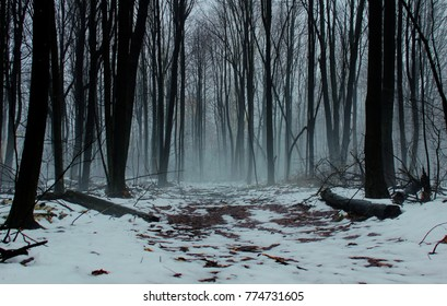 Dark Forest Trail. Snow covered trail into a dark foggy forest.