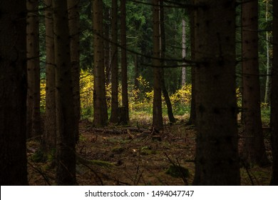 Dark Forest. Tree trunks in the foreground. In the Background, autumn lights, colors
