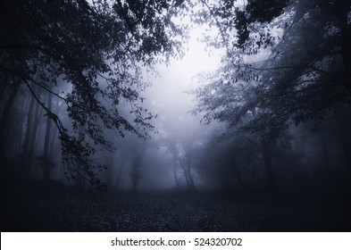 dark forest twilight