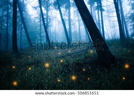 Dark forests with fireflies