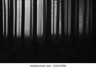 dark and forgy forest