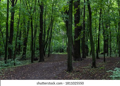 A dark and gloomy Park on a cloudy day, a path in the forest