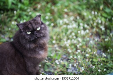 Dark gray cat in the garden.