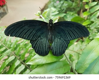 Dark green butterfly on a leaf
