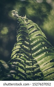 Dark green fern leaves in the forest - natural background.