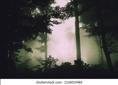 dark green fog in scary forest