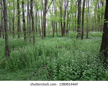Dark Green Forest - Woodland landscape and trees with copy space.