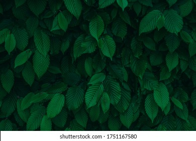 Dark green fresh natural leaves background texture