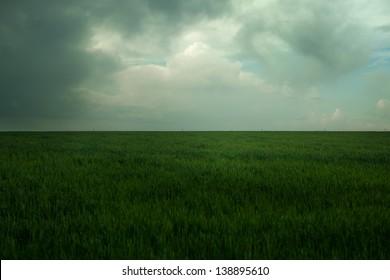 dark green lea under dark blue sky