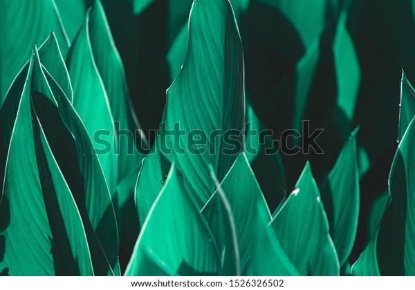 Dark Green Leaves Background Close Beautiful Stock Photo Edit Now